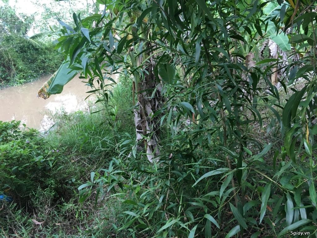Đất nông nghiệp dt 9000m2 tại xã an phước huyện mang thít vĩnh long - 1