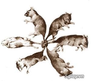 Chuột quậy phá quá...Hãy vào đây... Chuyên các loại thuốc chuột nhập khẩu