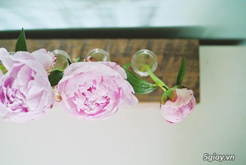 Lọ hoa cá tính từ gỗ và ống nghiệm - 207980