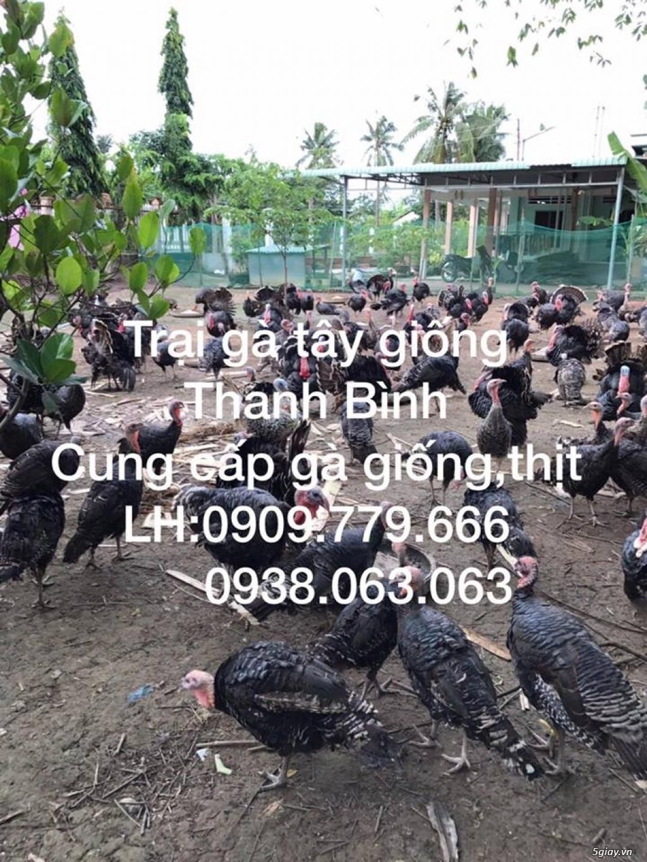 Trại gà tây Thanh Bình.Cung cấp gà tây thịt Giáng Sinh 2017 - 21