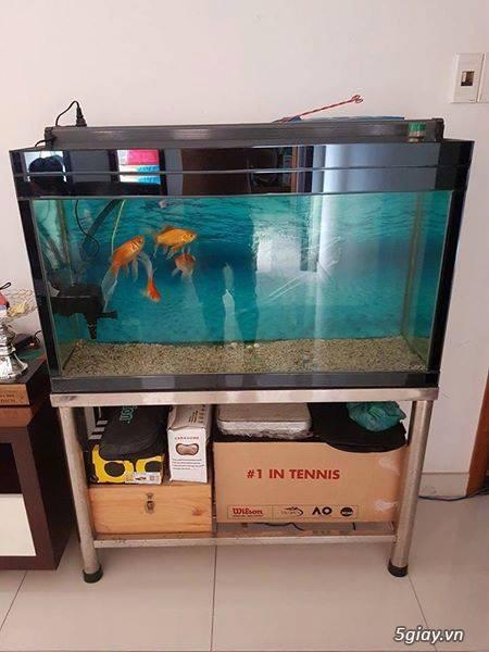 Thanh lý bộ hồ cá chân inox và bàn vi tính - 1