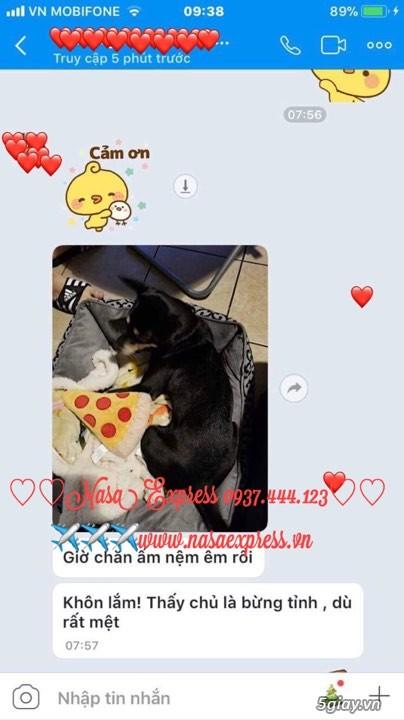 THỦ TỤC GIẤY TỜ ĐỂ ĐEM THÚ CƯNG chó mèo LÊN MÁY BAY ĐI MỸ CANADA