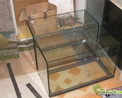 Trại Cá Betta Thanh: Nhận làm hồ kiếng theo y/c, Giá rẻ, cạnh tranh ! - 1