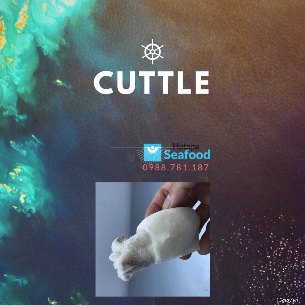 Hải sản đông lạnh chất lượng giá rẻ nhất, bạch tuộc, mực lá, mực nút, mực sữa, mực fillet mực nang. - 5