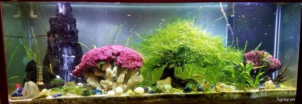 Chuyên cung cấp hồ cá trang trí phòng Khách độc-lạ !