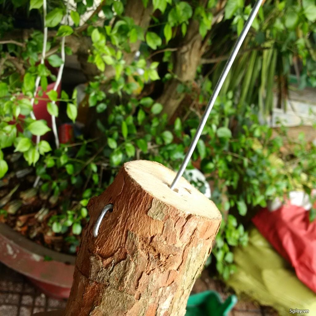 Vỏ thông khô, gỗ vú sữa trồng lan - 2