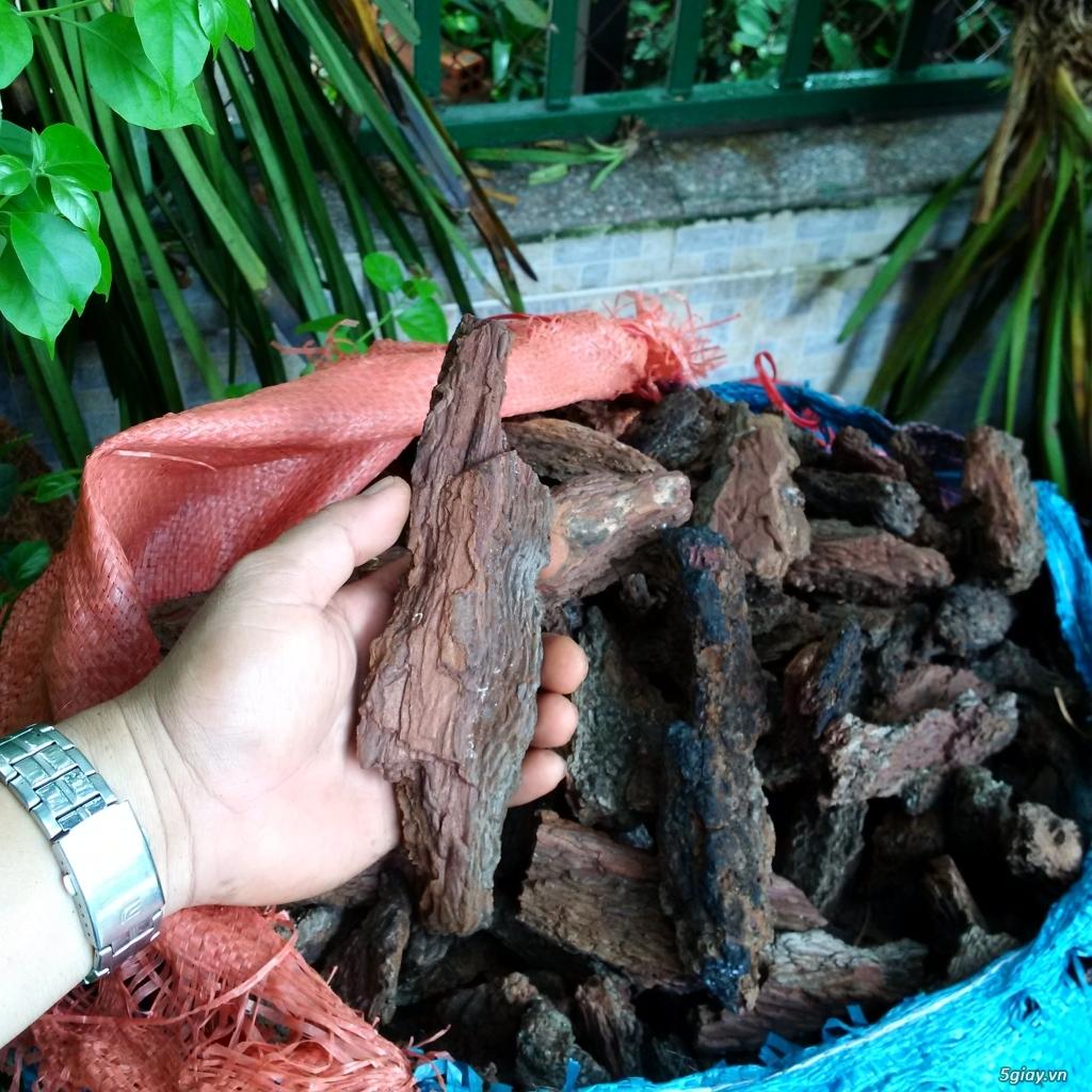 Vỏ thông khô, gỗ vú sữa trồng lan - 1
