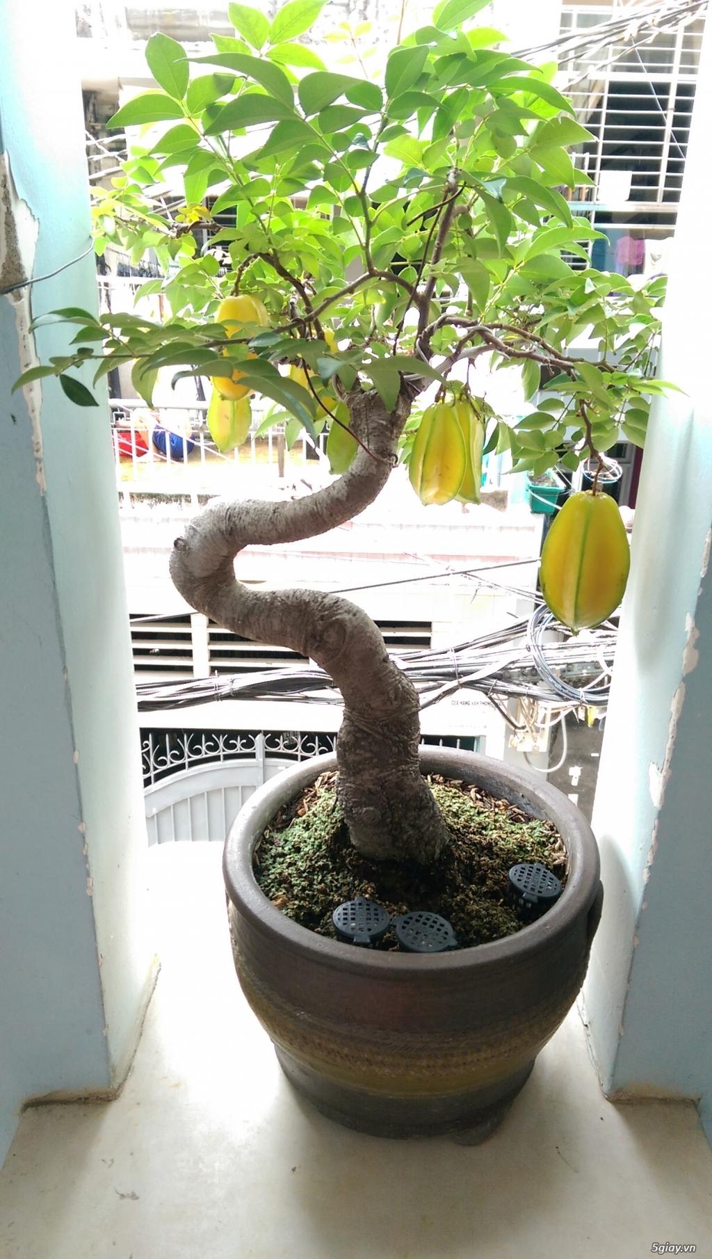 Giao lưu vài em bonsai mini giá mềm!!! - 2
