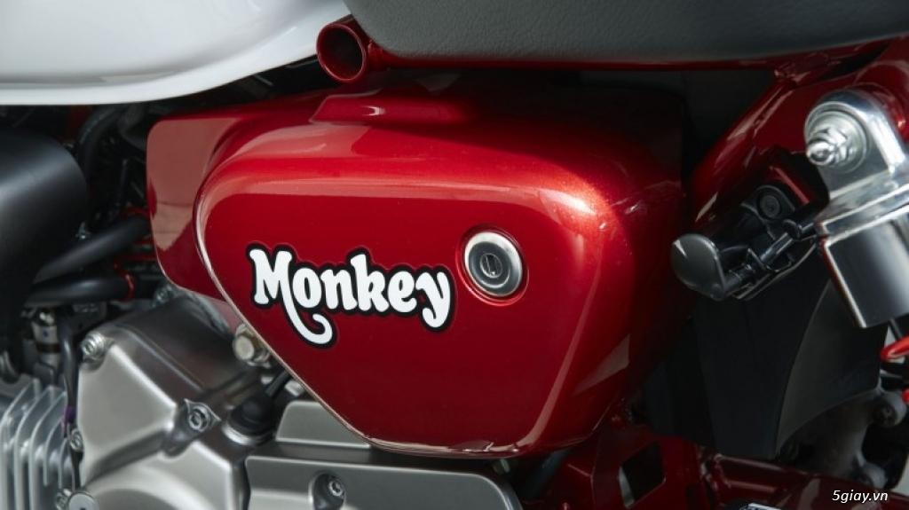 Honda Super Cub và Monkey 125 trở lại Mỹ - 4