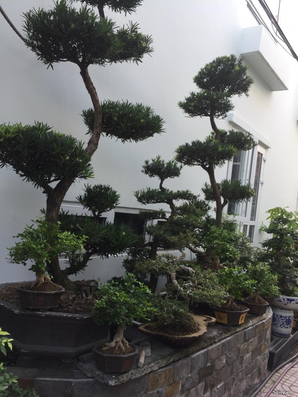 Bán tất cả cây kiểng đã thành phẩm tại tphcm