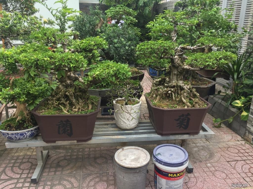 Bán tất cả cây kiểng đã thành phẩm tại tphcm - 4