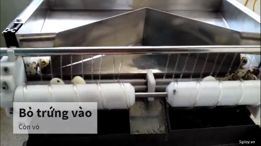 Máy bóc vỏ trứng cút năng suất 4500 trứng / h - 2