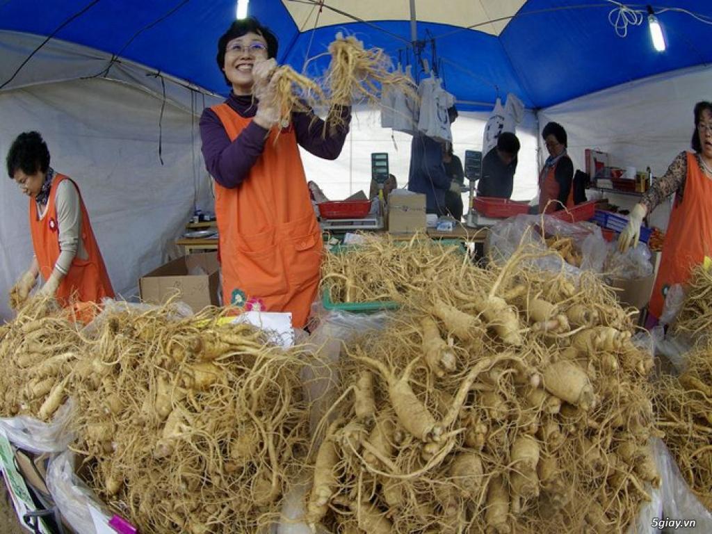 Sâm tươi Hàn Quốc 6 năm tuổi - hàng xách tay cực chuẩn 100%