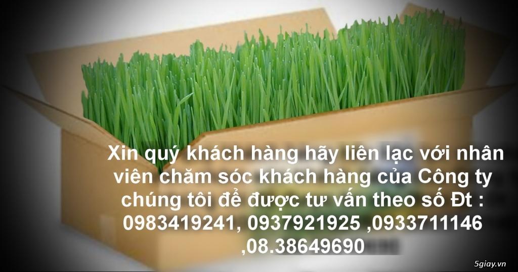Tp.HCM phân phối sỉ lẻ Cỏ Lúa Mạch Tươi trồng tự nhiên 100% Organic. - 1
