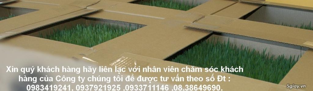 Tp.HCM phân phối sỉ lẻ Cỏ Lúa Mạch Tươi trồng tự nhiên 100% Organic.