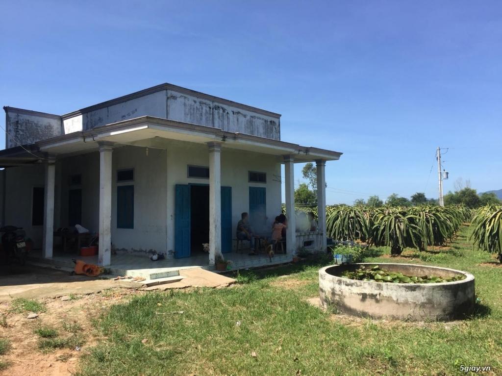 Bán đất trồng thanh long 9200m2, 1000 trụ thanh long. Bình Thuận - 1