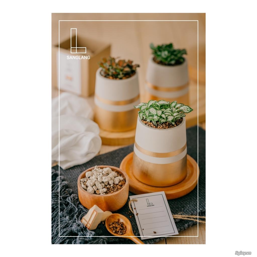 Sanglang: Sen Đá và Cây Nội Thất - Sang Trọng và Tinh Tế - 14