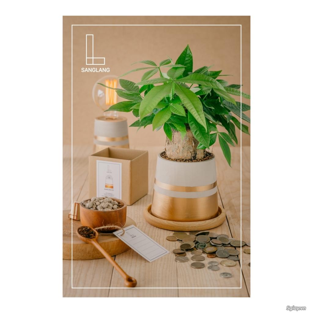 Sanglang: Sen Đá và Cây Nội Thất - Sang Trọng và Tinh Tế - 22