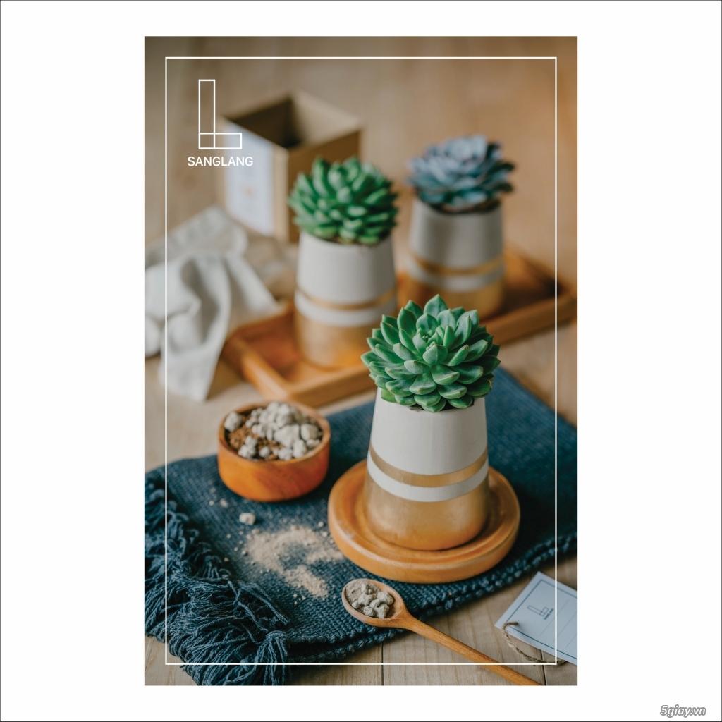Sanglang: Sen Đá và Cây Nội Thất - Sang Trọng và Tinh Tế - 4