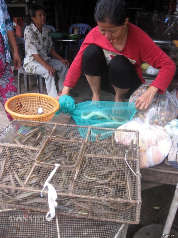 Bán rắn tạp các loại, rắn nước, bông sún,rắn trung - 2