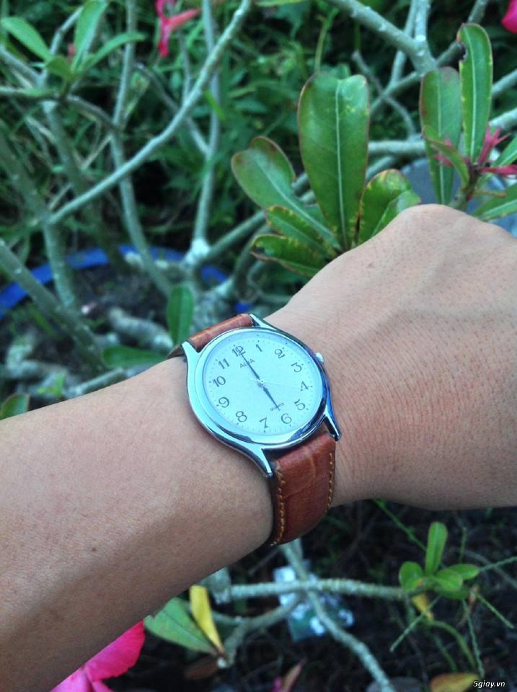 Đồng hồ Secondhand Japan, Thụy Sĩ (update thường xuyên) - 34