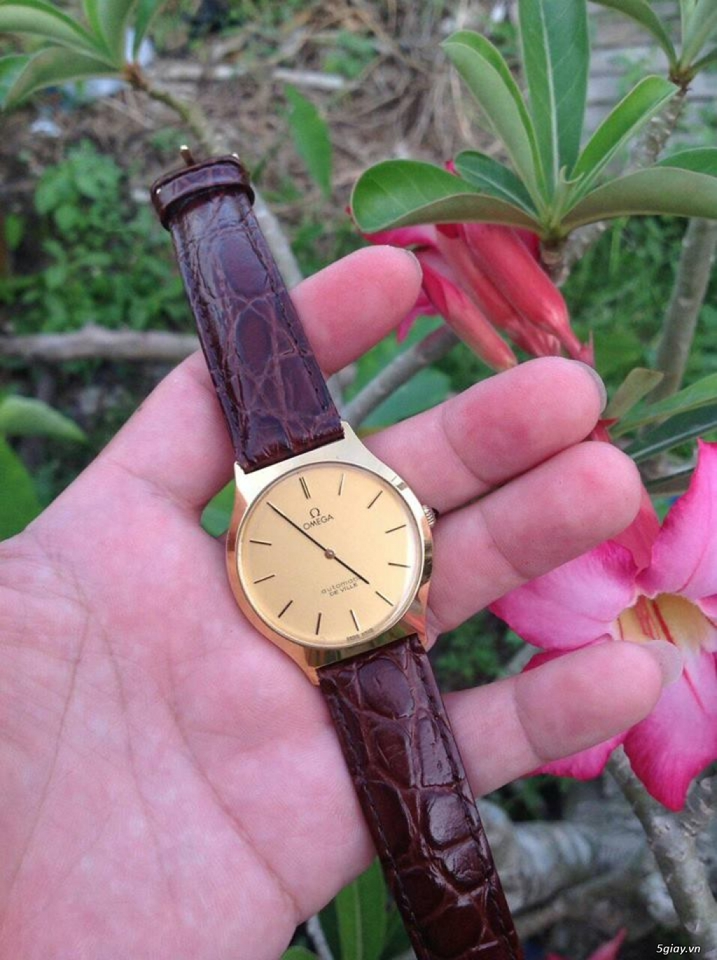Đồng hồ Secondhand Japan, Thụy Sĩ (update thường xuyên) - 42