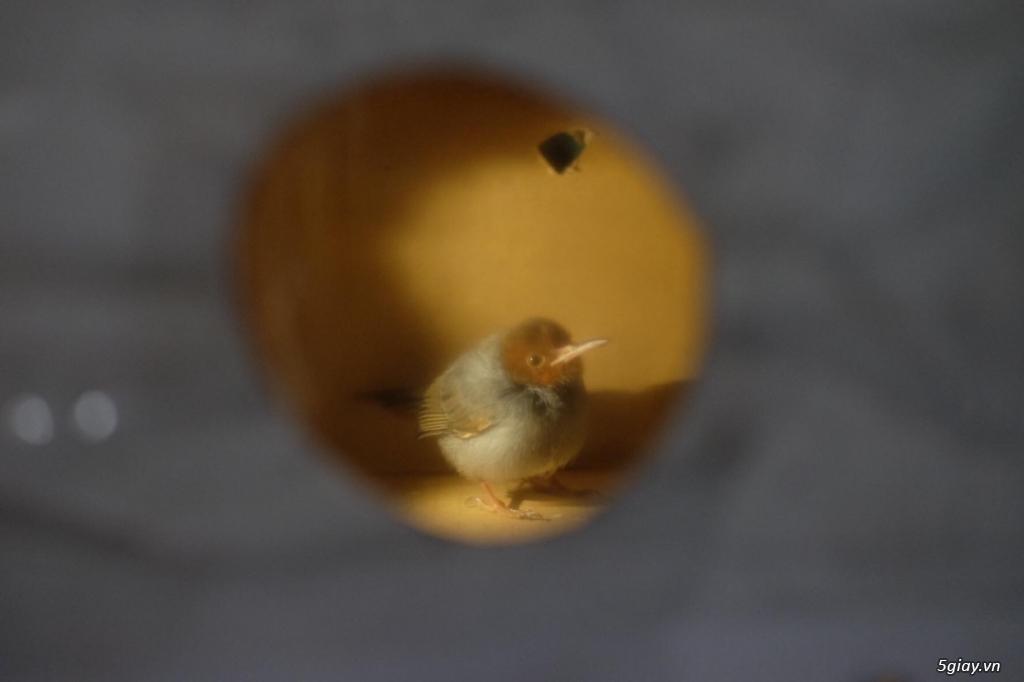 [Xin hỏi] Mọi người xem giúp em đây là chim gì vậy ạ