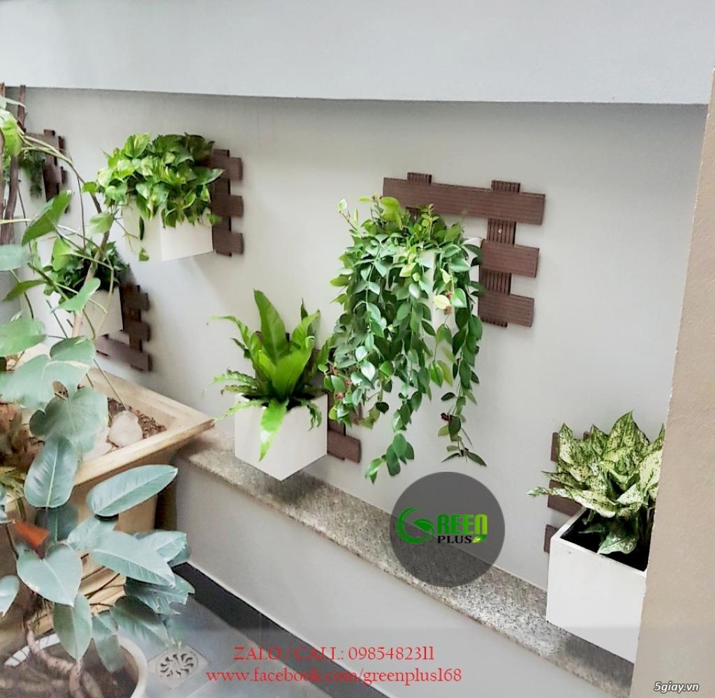 Thiết kế, trang trí ban công, chậu hoa, cây cảnh