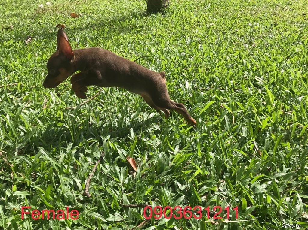 Bình Tân-Fox Hươu > 2 tháng Cần Bán - 2