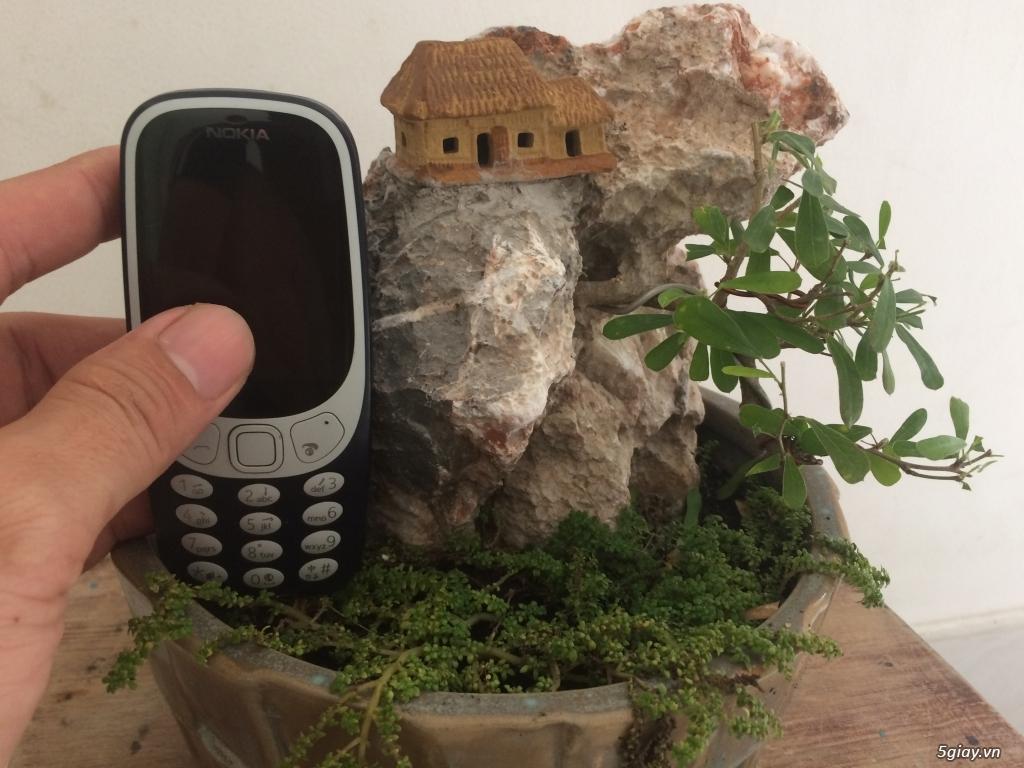 Tiểu cảnh mini cây xuyên đá
