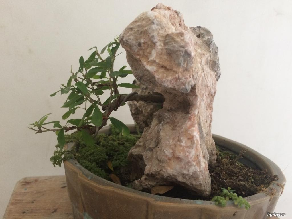 Tiểu cảnh mini cây xuyên đá - 1