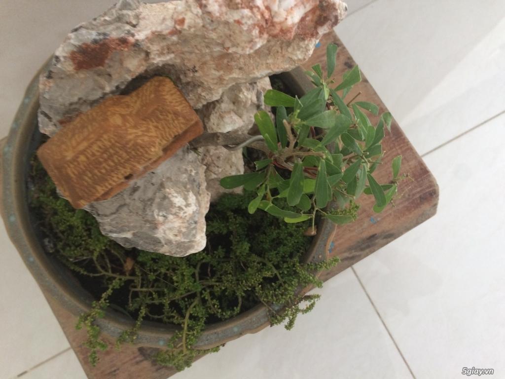 Tiểu cảnh mini cây xuyên đá - 3