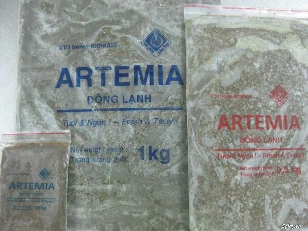 Trùng Huyết, Artemia sinh khối cao cấp, bobo thức ăn cao cấp cá cảnh ! - 3