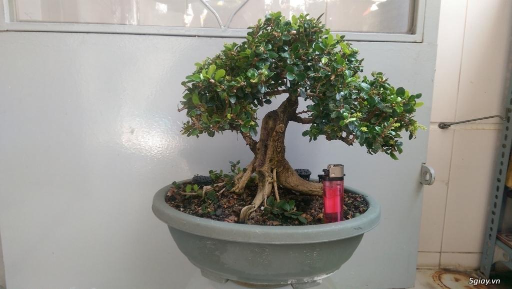 Giao lưu vài em bonsai mini giá mềm!!! - 10