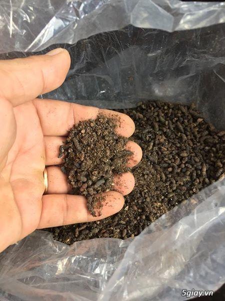 Vỏ thông khô, gỗ vú sữa trồng lan - 4