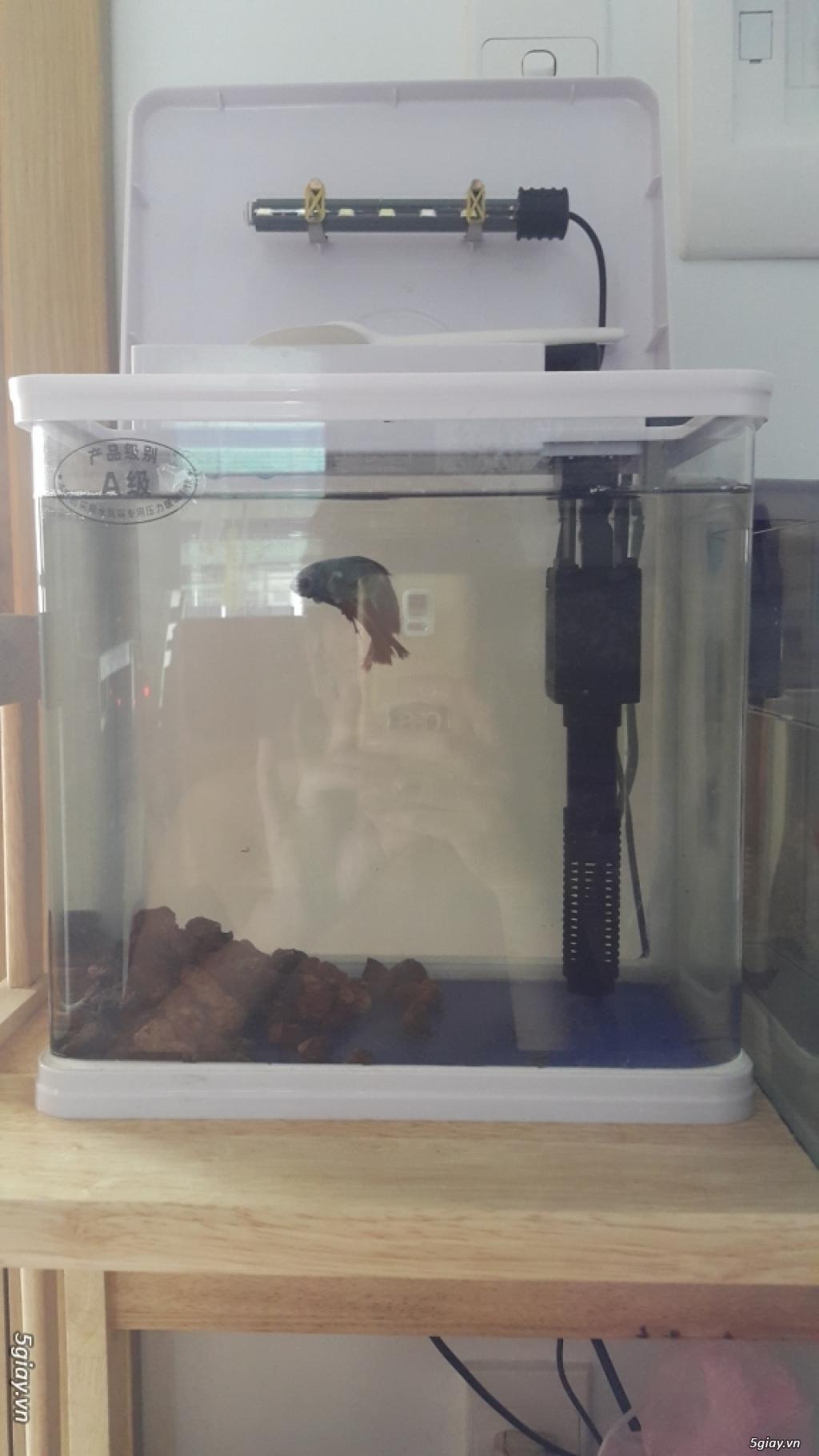 Thanh lý hồ đúc nguyên bộ Sobo Mini - 1