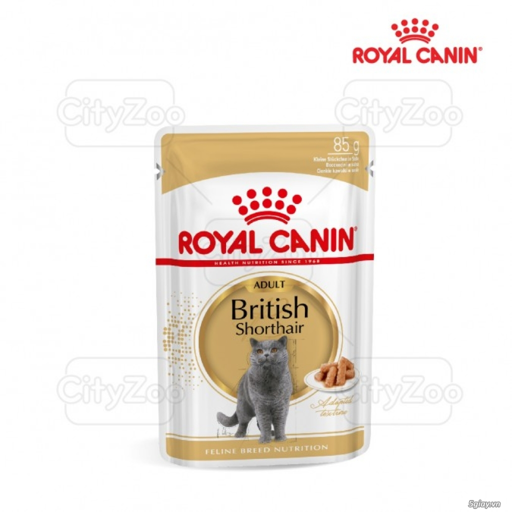 HACHIKO đại lý thức ăn của hãng ROYAL CANIN đến từ PHÁP - 19