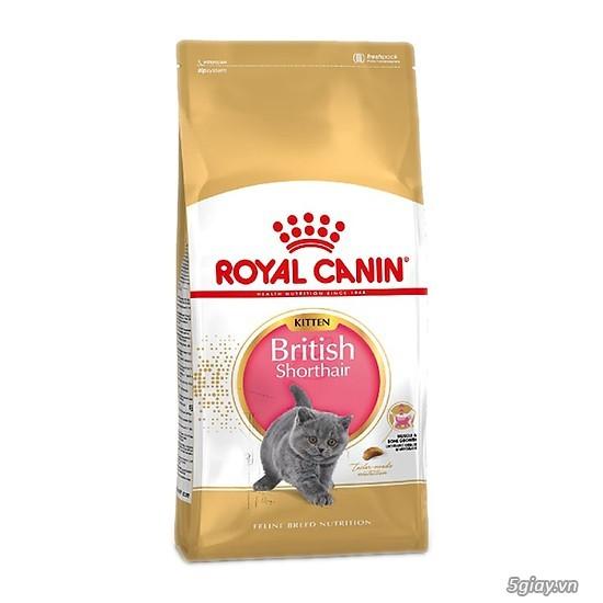 HACHIKO đại lý thức ăn của hãng ROYAL CANIN đến từ PHÁP - 13