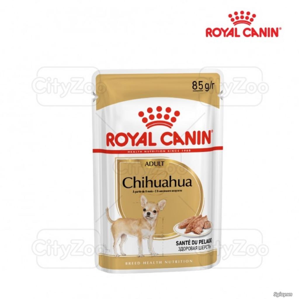 HACHIKO đại lý thức ăn của hãng ROYAL CANIN đến từ PHÁP - 24