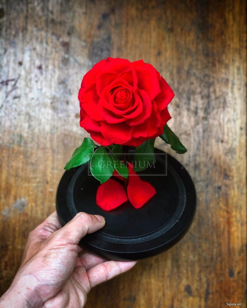 HCM - Hoa hồng vĩnh cữu đặt trong lọ kính cực kỳ sang trọng - 3