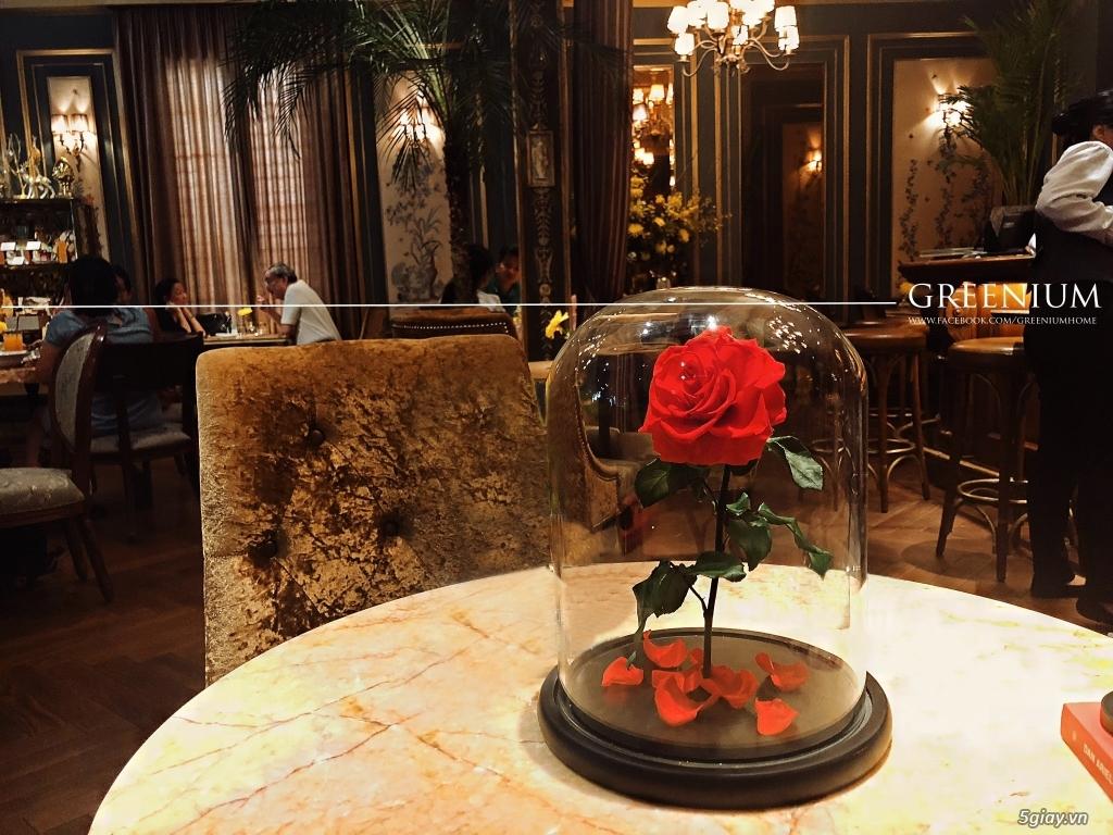 HCM - Hoa hồng vĩnh cữu đặt trong lọ kính cực kỳ sang trọng - 4