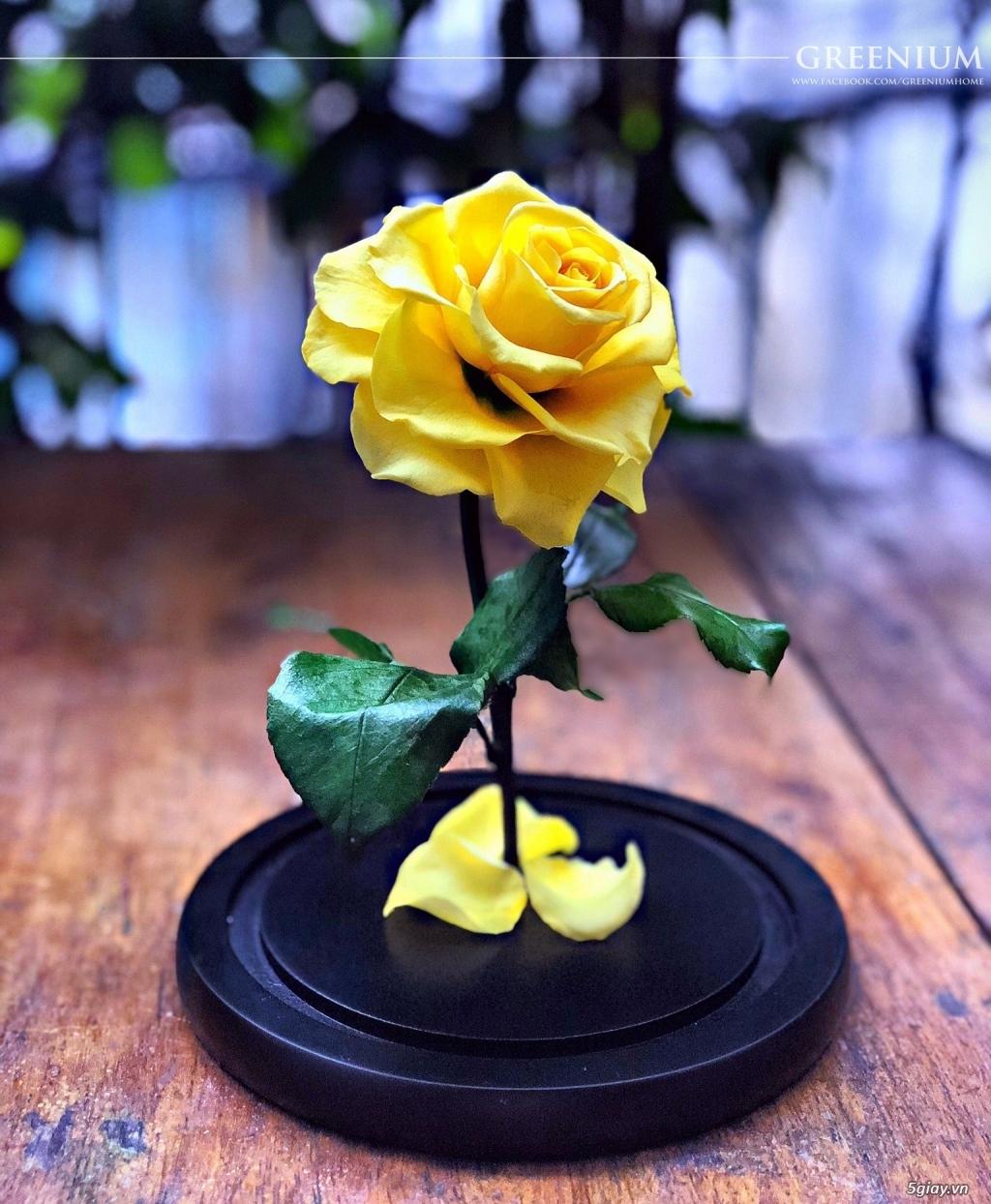 HCM - Hoa hồng vĩnh cữu đặt trong lọ kính cực kỳ sang trọng - 1