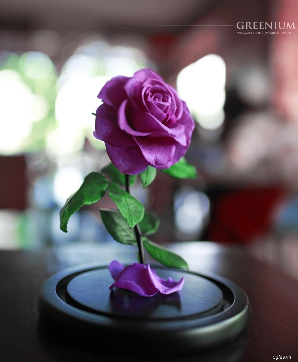HCM - Hoa hồng vĩnh cữu đặt trong lọ kính cực kỳ sang trọng