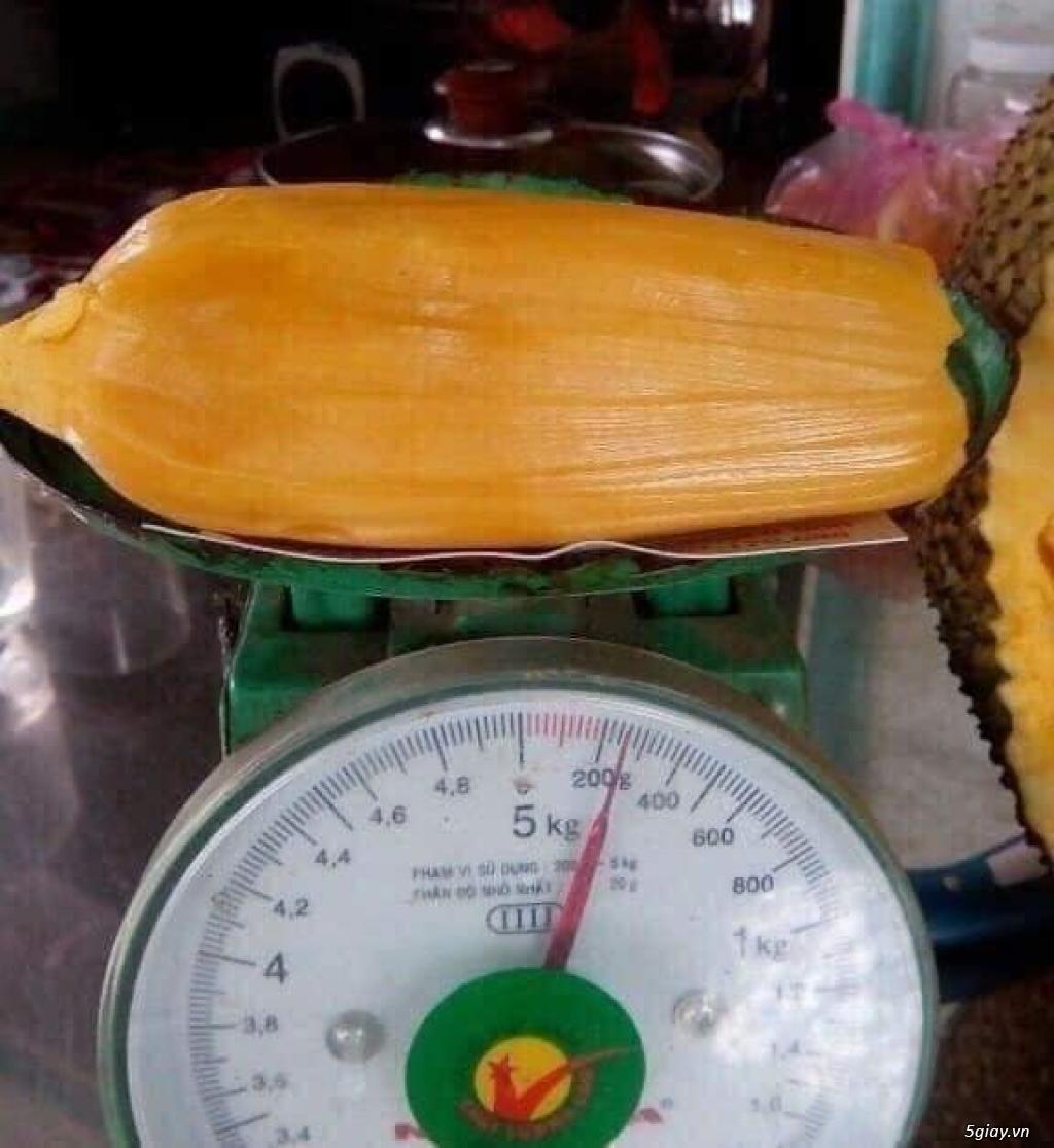 Mít trái dài Malaysia trái dài 1 m nặng 50 kg