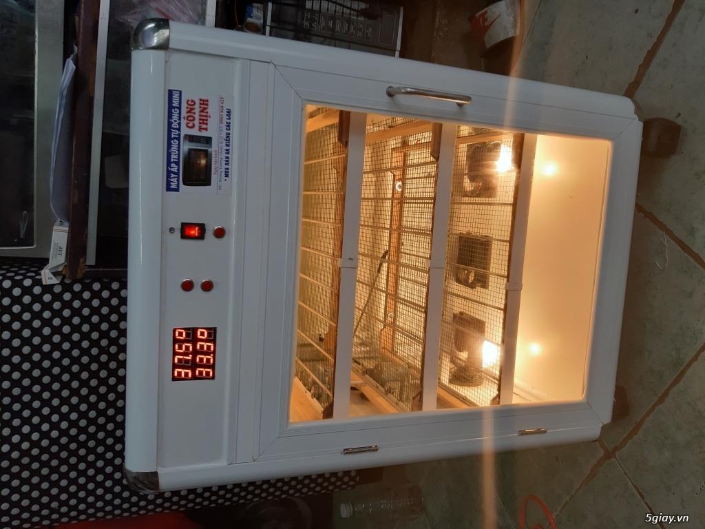 Máy ấp trứng tự động mini giá rẽ - 5