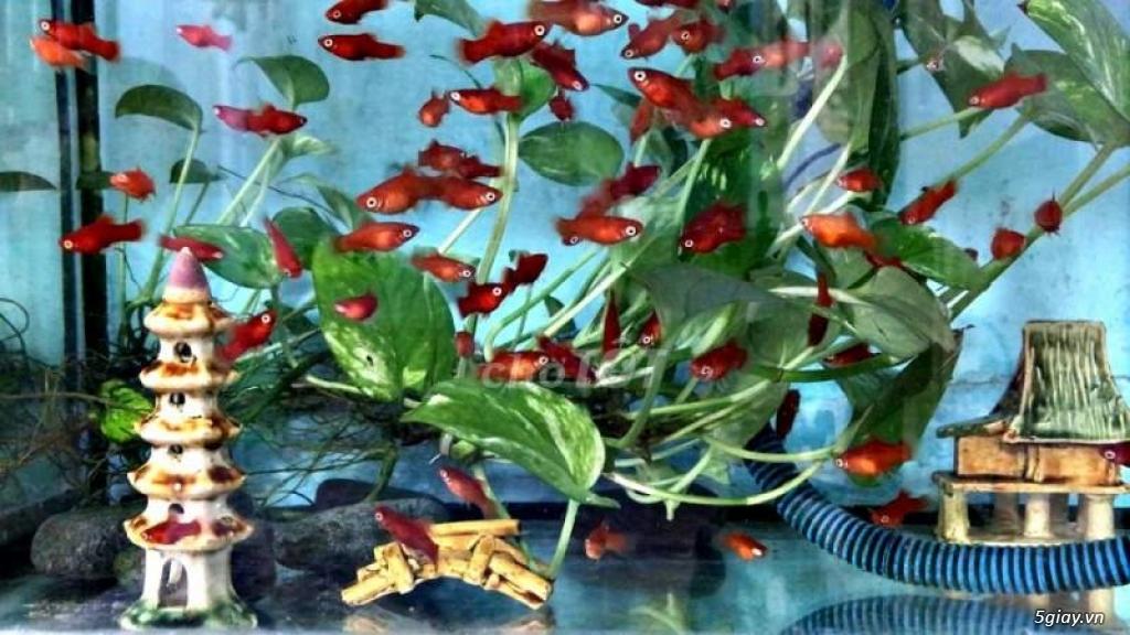 Cá thủy sinh đẹp - 2