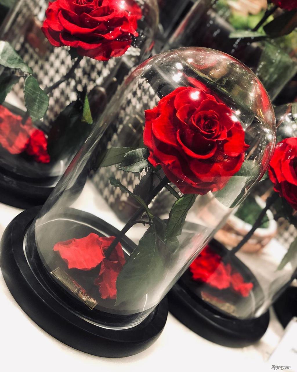 HCM - Hoa hồng vĩnh cữu đặt trong lọ kính cực kỳ sang trọng - 2