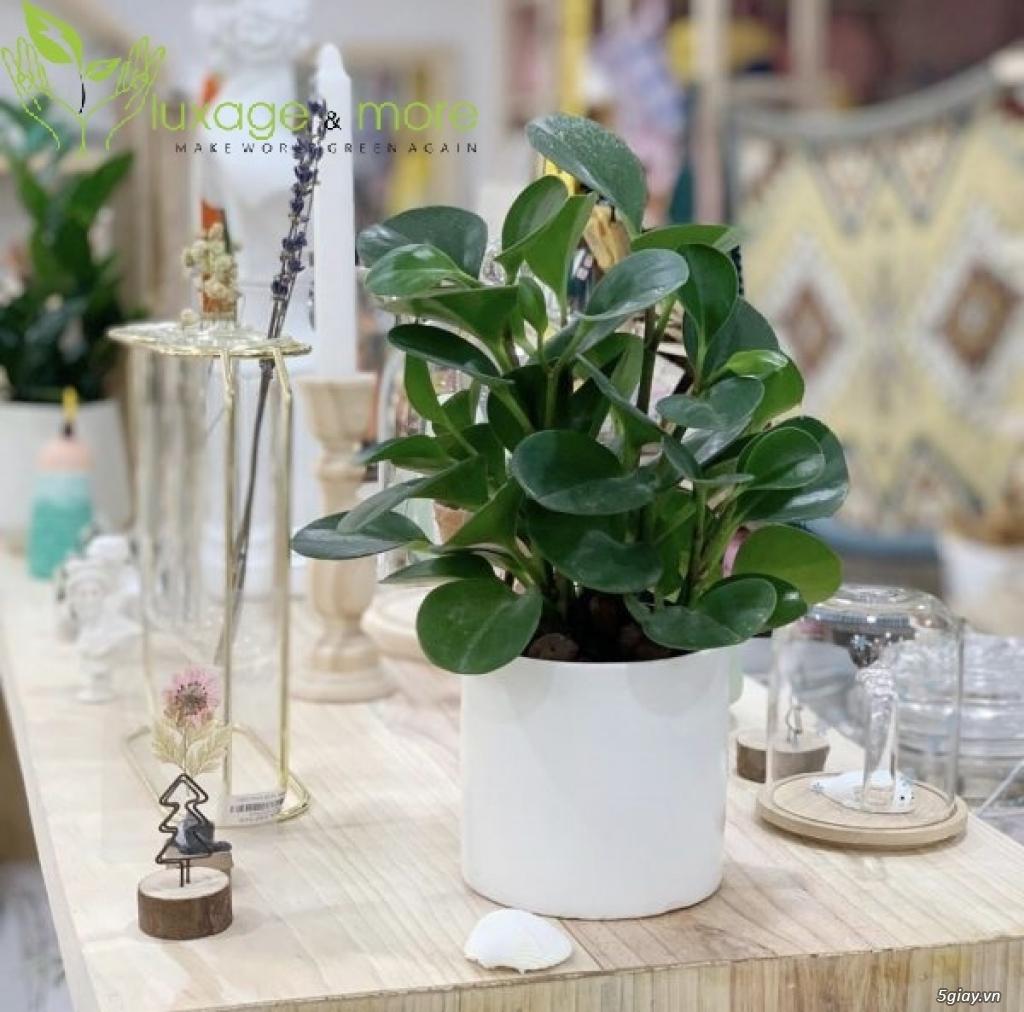 Cây Cảnh nội ngoại thất , cây cảnh để bàn  , tiểu cảnh terrarium - 17