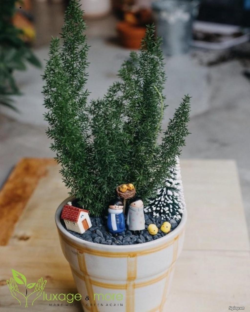 Cây Cảnh nội ngoại thất , cây cảnh để bàn  , tiểu cảnh terrarium - 22