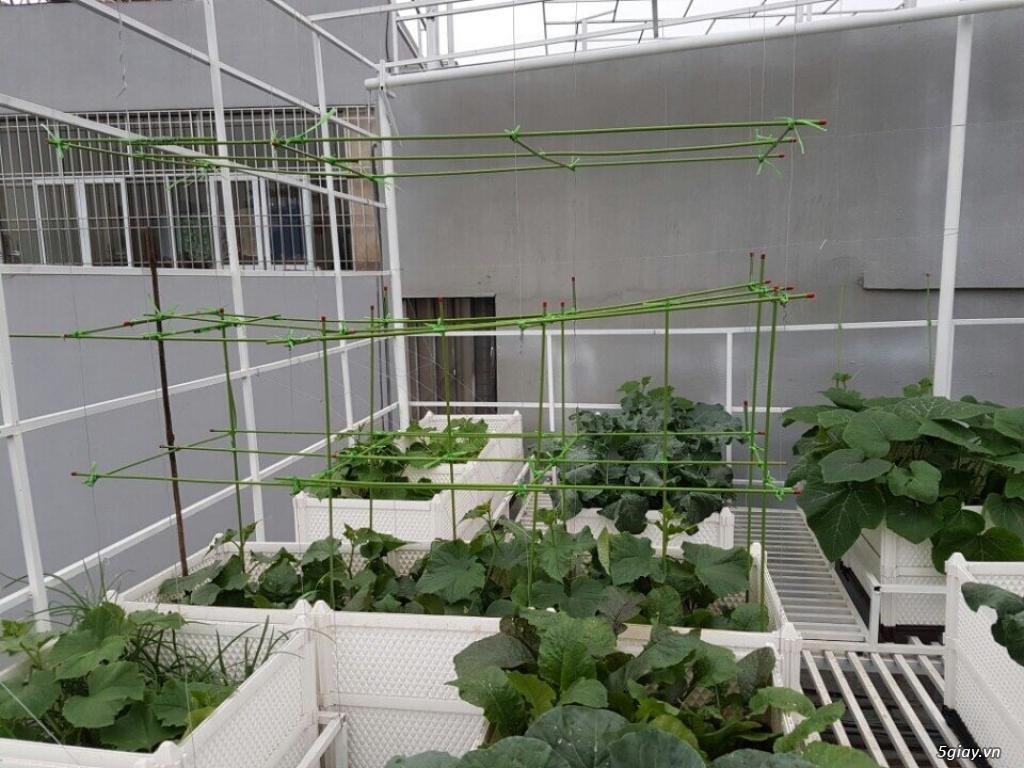 Chậu trồng rau ghép thông minh dài 1 mét cao 42cm (QA 100x50x42) - 15